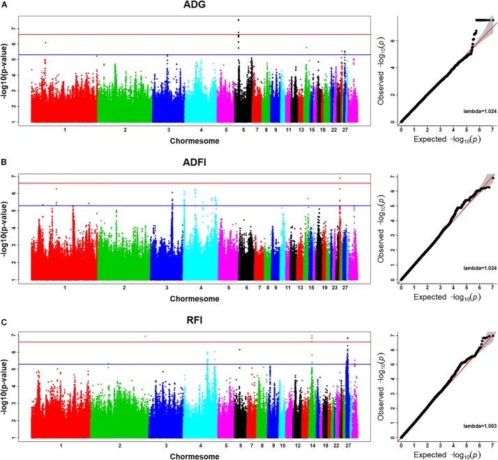 New Insights From Imputed Whole-Genome Sequence-Based Genome-Wide Association Analysis and Transcriptome Analysis: The Genetic Mechanisms Underlying Residual Feed Intake in Chickens.